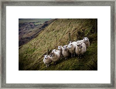 Flocking Together Framed Print