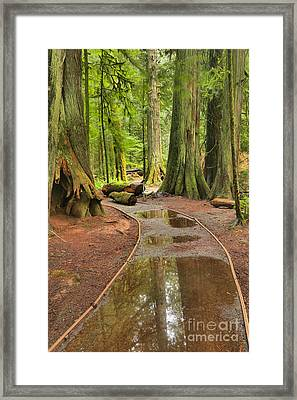 Flooded Pathway Framed Print by Adam Jewell
