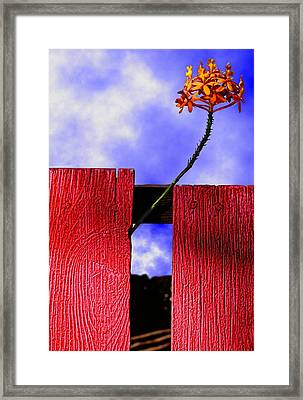 Flora And The Red Fence Framed Print