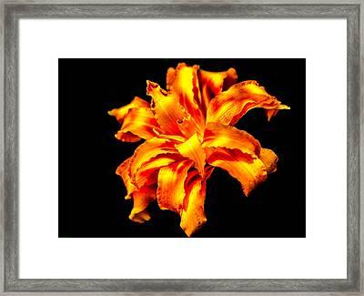 Flora Dance Framed Print
