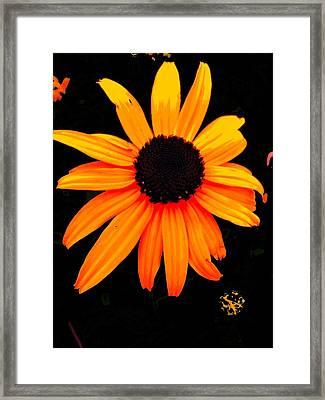 Floral 1 Framed Print by Chuck Landskroner