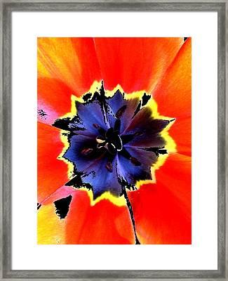 Floral 1229 Framed Print by Chuck Landskroner