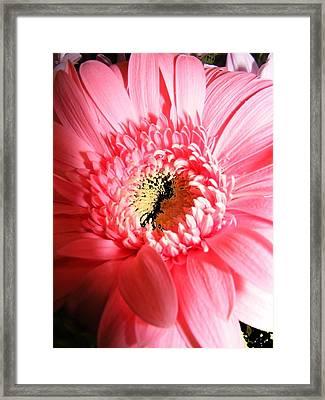 Floral 41 Framed Print by Chuck Landskroner