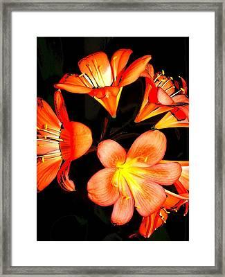 Floral 6019 Framed Print by Chuck Landskroner