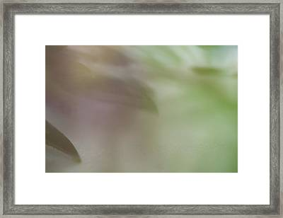 Framed Print featuring the photograph Floral Abstract by Roger Mullenhour