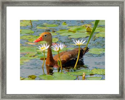 Floral Accessories  Framed Print