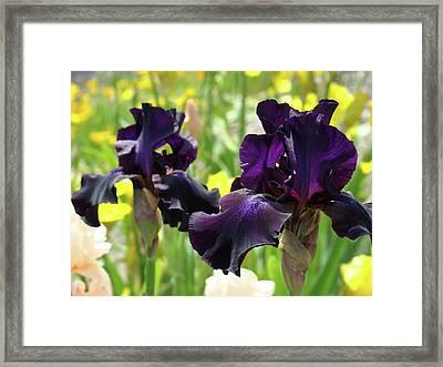 Floral Art Deep Purple Iris Flowers Irises Baslee Troutman Framed Print by Baslee Troutman