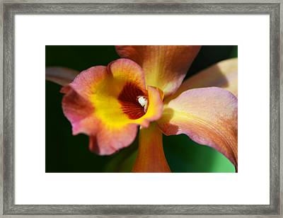 Floral Art - Intimate Orchid 3 - Sharon Cummings Framed Print by Sharon Cummings