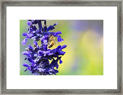 Floral Art - Spring Fever - Sharon Cummings Framed Print by Sharon Cummings