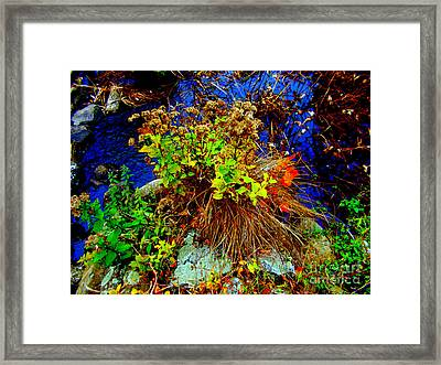 Floral Blues Framed Print by Rick Maxwell