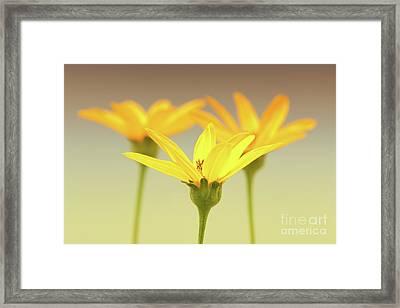 Floral Brilliance Framed Print by Anita Oakley