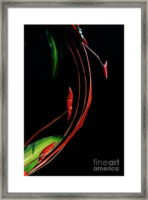 Framed Print featuring the photograph Floral Curve by Charline Xia