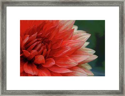 Floral Delight Framed Print by Mike Martin