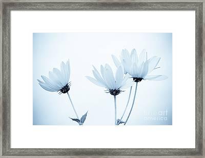 Floral Elegance Framed Print by Anita Oakley