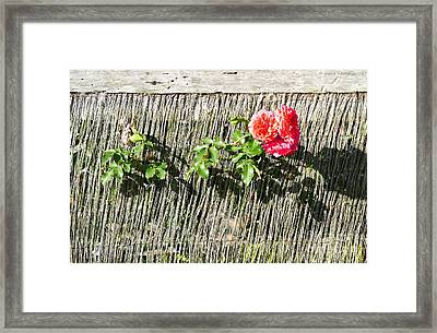 Floral Escape Framed Print by Ivana Westin