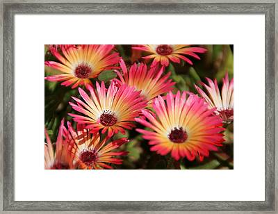 Floral Expectancy Framed Print by Andrea Jean