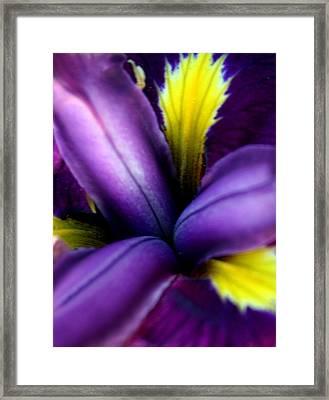 Floral Explosion Framed Print by Alexandra Harrell