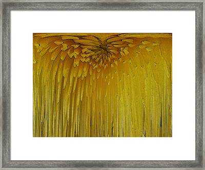Floral Falls 5 Framed Print by Tim Allen