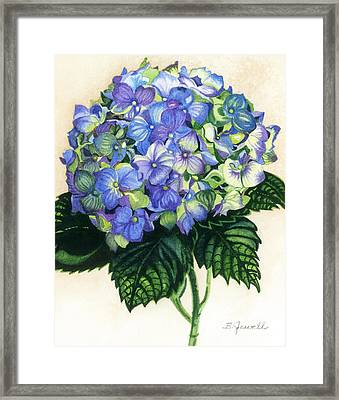 Floral Favorite Framed Print by Barbara Jewell
