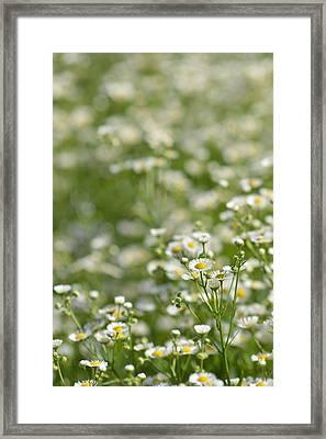Floral Field #1 Framed Print