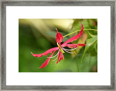 Framed Print featuring the photograph Floral Flair by Deborah  Crew-Johnson