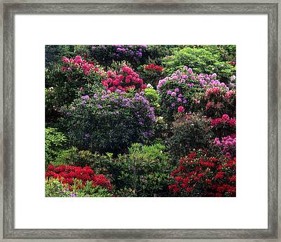 Floral Garden-32 Framed Print by Jerry Shulman