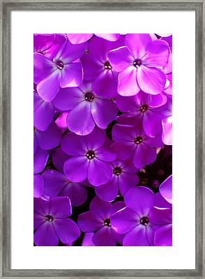 Floral Glory Framed Print by David Lane