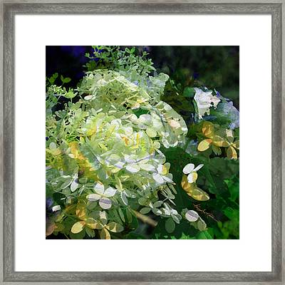 Floral Illusion Framed Print by Hanne Lore Koehler