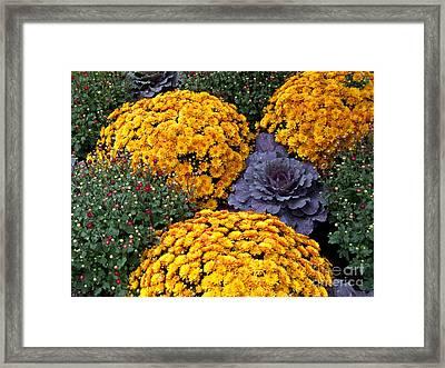 Floral Masterpiece Framed Print by Ann Horn