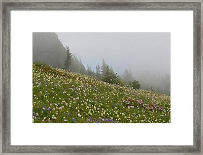 Floral Meadow Framed Print