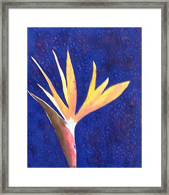 Floral Framed Print by Monika Deo