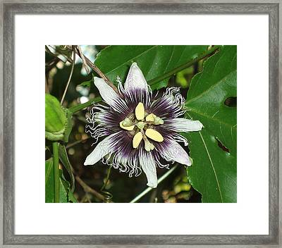 Floral No.2 Framed Print by Gregory Young