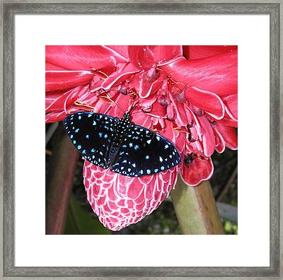 Floral No.8 Framed Print by Gregory Young