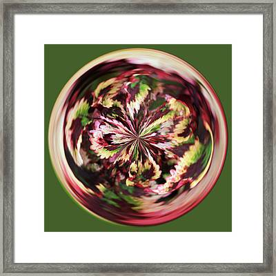 Framed Print featuring the photograph Floral Orb by Bill Barber