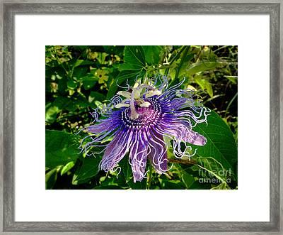 Floral Passion Framed Print