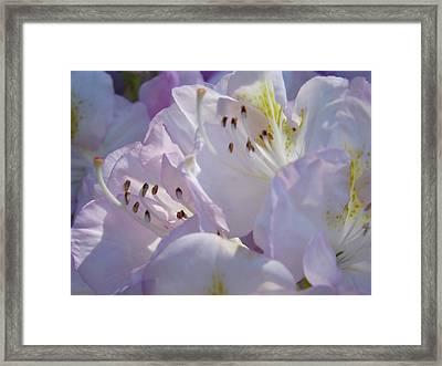 Floral Pastel Art Prints Nature Rhodies Rhodendrons Baslee Troutman Framed Print