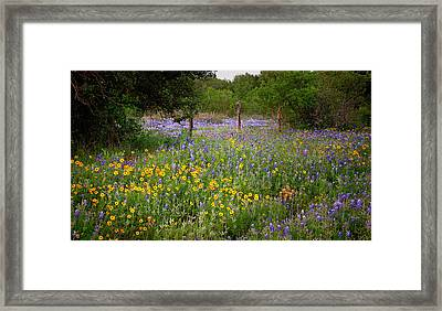 Floral Pasture No. 2 Framed Print by Jon Holiday