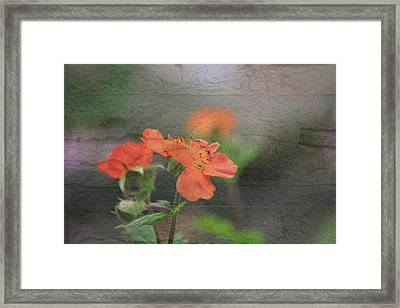 Floral Photo Of Orange Spring Flower And Texture Framed Print