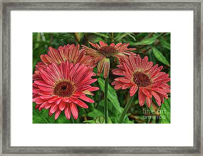 Framed Print featuring the photograph Floral Pink by Deborah Benoit
