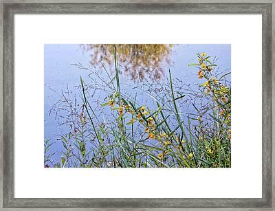 Floral Pond  Framed Print