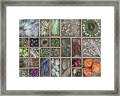 Floral Seeds Framed Print by Tim Gainey