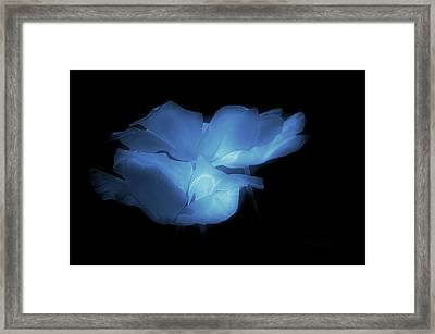 Floral Spring Tulips 2017 Blue Framed Print by Thomas Woolworth