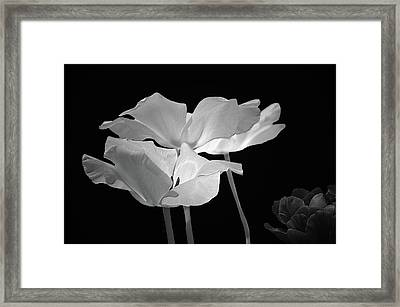 Floral Spring Tulips 2017 Bw 01 Framed Print by Thomas Woolworth