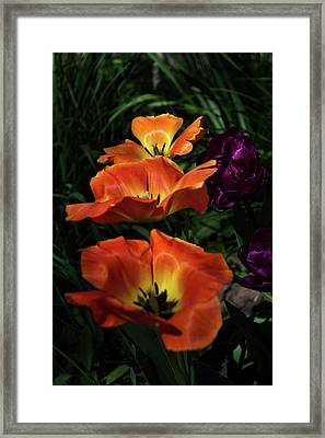 Floral Spring Tulips 2017 Early Morning Vertical Framed Print