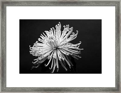Floral Still Life Framed Print by Robert Ullmann