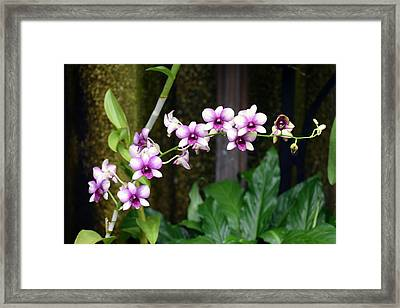Framed Print featuring the photograph Floral Sway by Deborah  Crew-Johnson