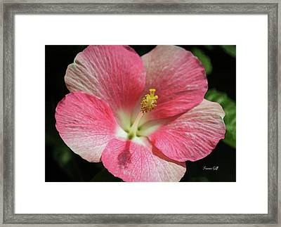 Floral Symphony In Pink Framed Print by Suzanne Gaff