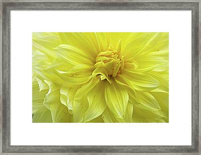 Floral Whipped Cream Framed Print by Juergen Roth