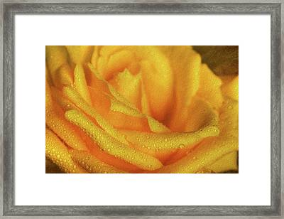 Framed Print featuring the photograph Floral Yellow Rose Blossom by Shelley Neff