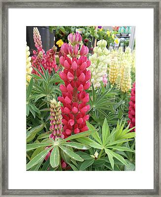 Floral2 Framed Print by Cynthia Powell